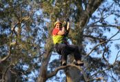 Nowra Trees Adventure